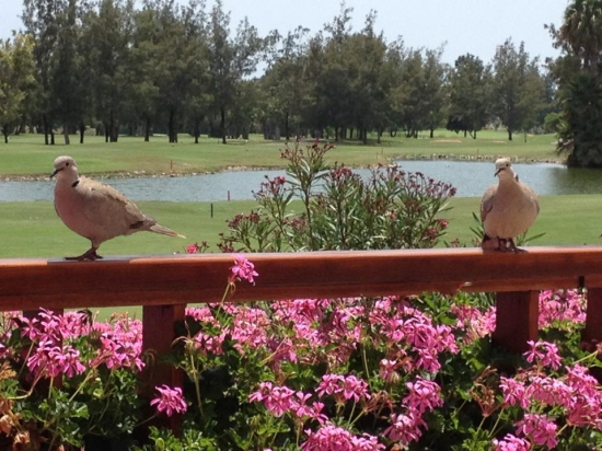 Golf Las Americas property