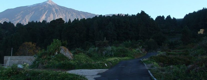 The Cabildo de Tenerife will make a 'clean' pine to prevent deterioration of mountain in Tenerife