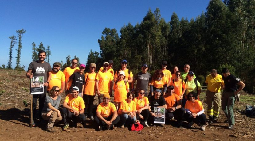 "Tenerife Walking Festival fulfills its commitment ""zero footprint"" with the plantation of Monteverde species"