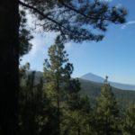 Tenerife Walking Festival reforestation in the mount La Esperanza