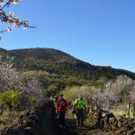 Almond blossom route Tenerife
