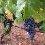 Winery Tenerife