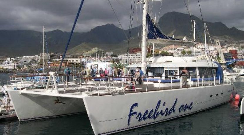 Freebird Catamaran is a Whale & Dolphin watch Tour Operator in Tenerife